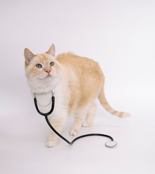 Doctor cat with a phonendoscope on a white background