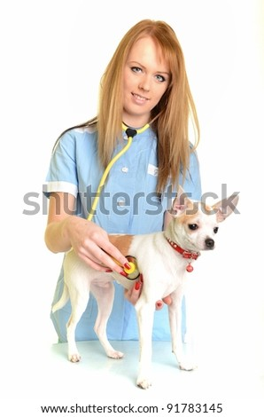 Doctor checkup with stethoscope  dog in a veterinary office - stock photo