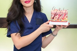 Doctor dermatologist or trichologist holding and showing human skin cross-section plastic model.Detailed skin structure with hair in clinic for education.Diagnosis of hair diseases, hair loss problem.