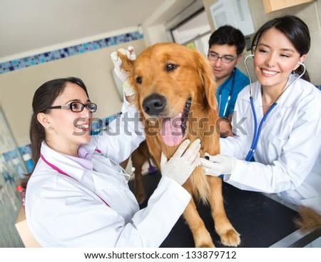 Doctor examining a cute dog at the vet