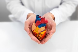 Doctor showing support for heart and cardiac health. Anatomical model of the heart in hands of cardiologist. Heart attacks and medical treatment