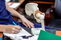 Doctor shows to patient place of hip joint in artificial semi-anatomical model of pelvis and femur. Medical photos from consulting or advice of doctor traumatologist or orthopedic surgeon.
