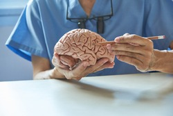 Doctor using pencil to demonstrate anatomy of artificial human brain model in medical office