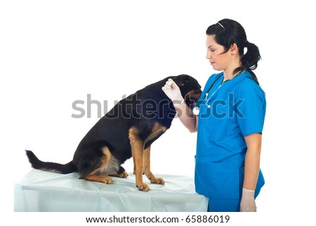 Doctor vet taking temperature to a dog  who sitting on table