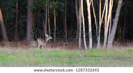 Doe and offspring near a forest edge in North Carolina #1287332692