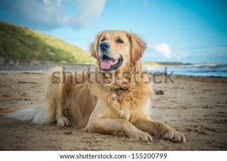 Dog #155200799