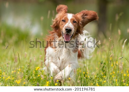Dog #201196781