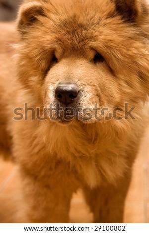 Dog. #29100802