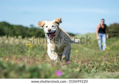 Dog #310699220