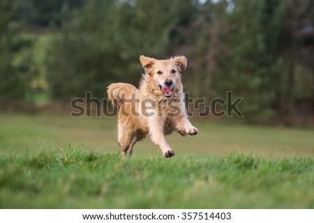 Dog #357514403
