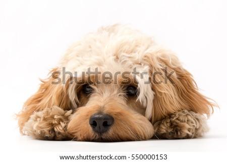 Dog #550000153