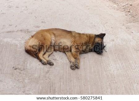 dog #580275841