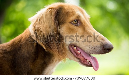 Dog #709077880