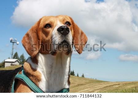 dog #711844132