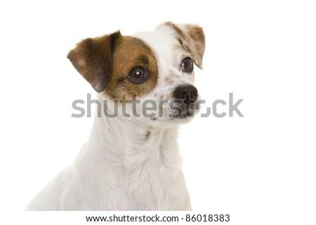 Dog #86018383