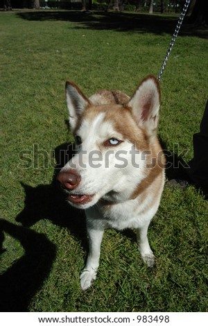 dog Foto stock ©