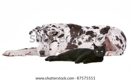 dog and a cat in front of a white background