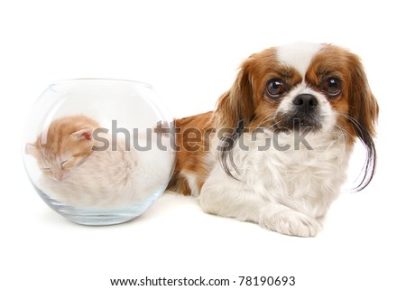 dog and a vase with kittens