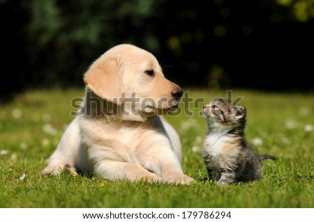 Dog and cat #179786294
