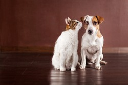 Dog and cat at home. Friendship pets