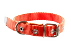 Dog and cat collar isolated on white. Orange collar for dogs and cats. Pet collar isolated on white background. Accessory for pets. New orange collar for animals isolated on white background.