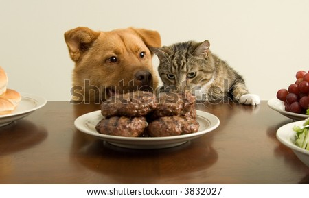 Dog and cat going for a feast