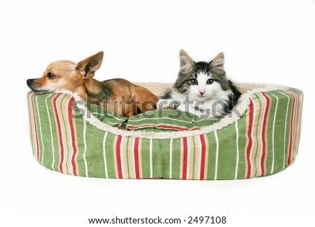 Dog and Cat in Bed - stock photo