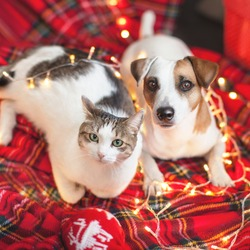 Dog and cat in christmas decoration. Happy new year and merry Christmas!