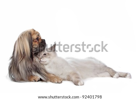 dog and Cat in front of a white background