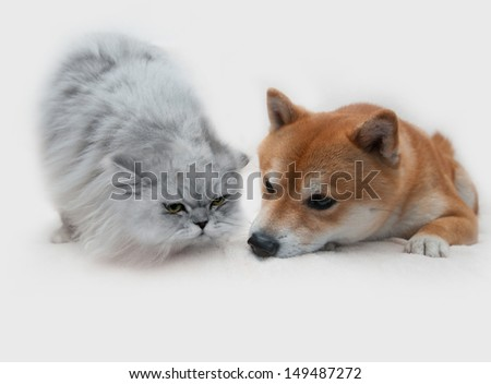 Dog and cat isolated on white