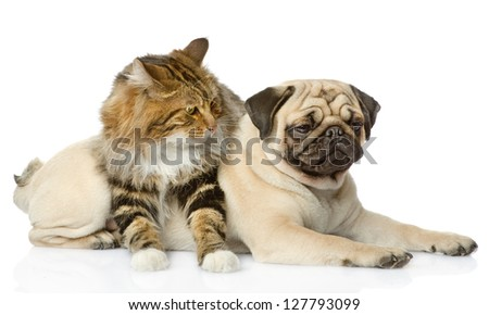 dog and cat. isolated on white background