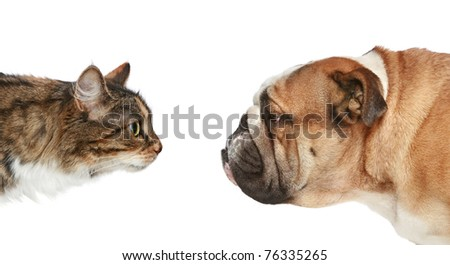 Dog and Cat looking at each other. Side view