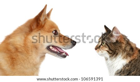 Dog and Cat looking at each other. Side view, isolated on a white background - stock photo