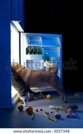 Dog and cat looking for meat in the refrigerator