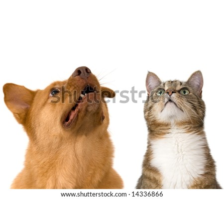 Dog and cat looking up. Add your text above. - stock photo