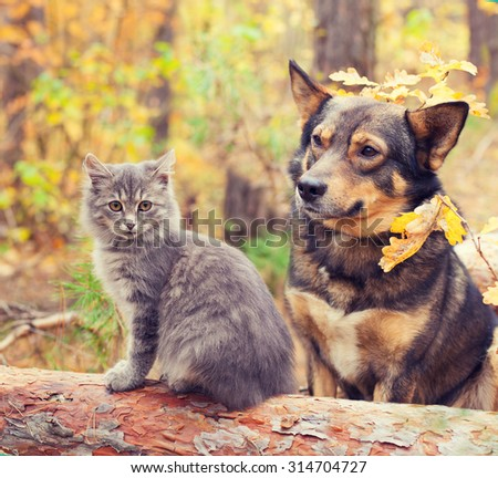 Dog and cat outdoors in autumn forest