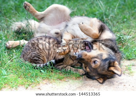 Dog and cat playing on the grass