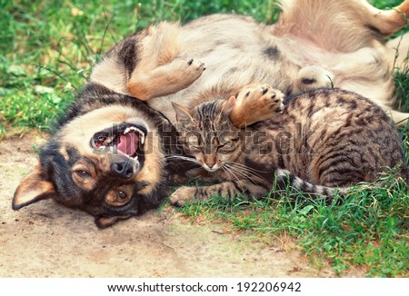 Dog and cat playing outdoor. Dog lying on the back