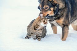 Dog and cat playing together outdoor in the snow in winter
