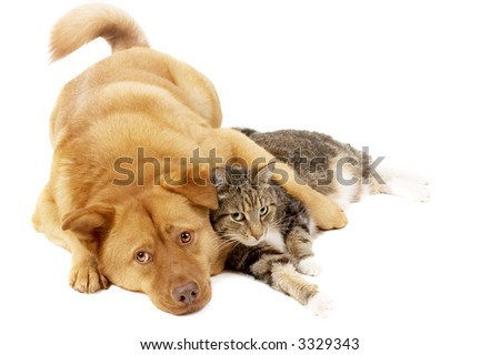 Dog and cat relaxing on white background - stock photo