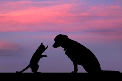 dog and cat silhouette with beautiful background