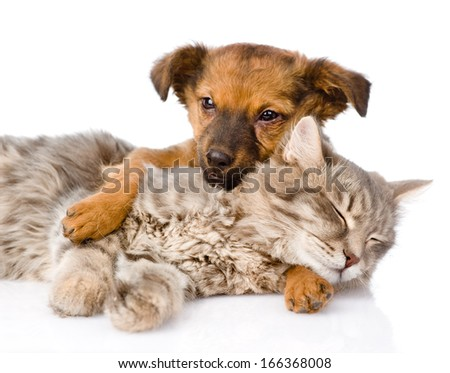 Dog and cat sleeping. isolated on white background