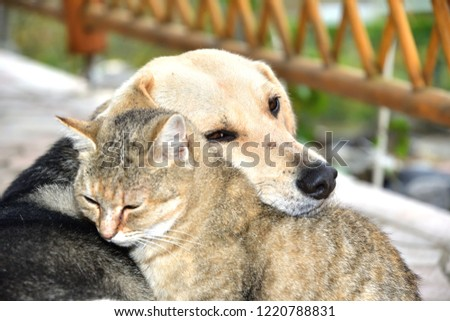 Dog and cat to snuggle in animal love best friends