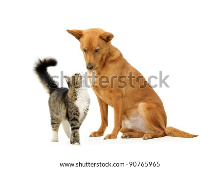 Dog and cat together isolated on white background. Looking one on another.