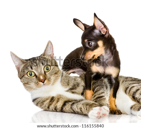 dog and cat together. the puppy looks at a cat. isolated on white background