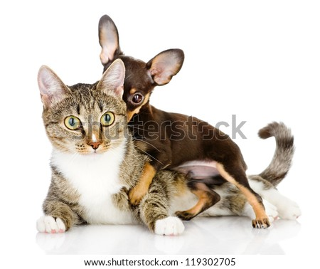 dog and cat together. the puppy whispers secrets on an ear of a cat. isolated on white background