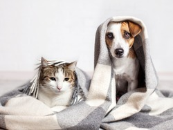 Dog and cat under a plaid. Pet warms under a blanket in cold autumn weather