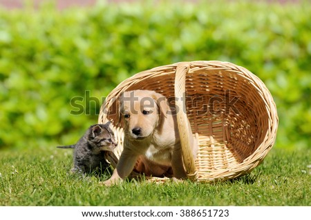 Dog and cat with basket on meadow