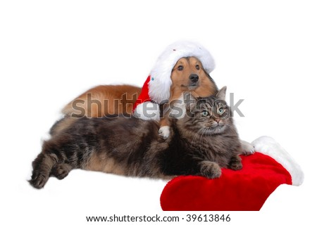dog and cat with christmas bonnet and christmas sock
