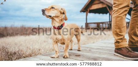 Dog and hiker standing on a wood walkway by the rest cabin